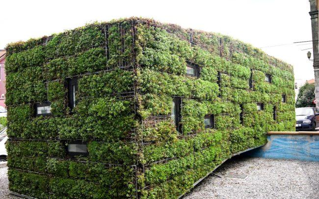 Fachada vegetal en oficina de información turística de Colombres Asturias de Dolmen Arquitectos