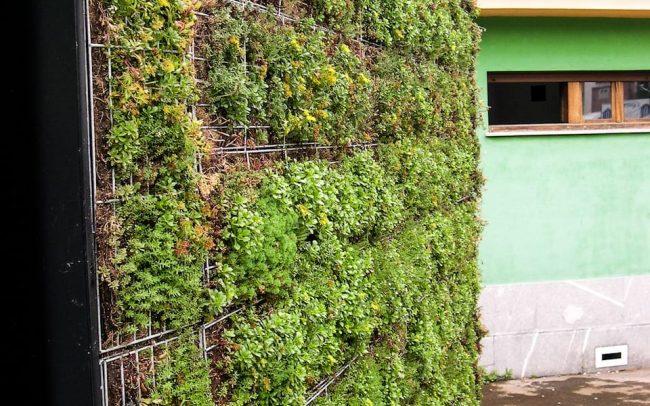 Fachada verde en punto de información turística de Colombres Asturias obra de Dolmen Arquitectos